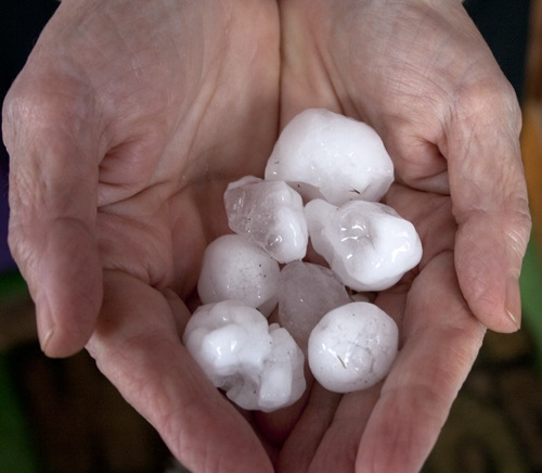 RoZ holds a sampling of hail stones from the La Crosse hailstorm of April 10, 2011