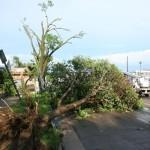 Down Tree - 1000 block Green Bay St.