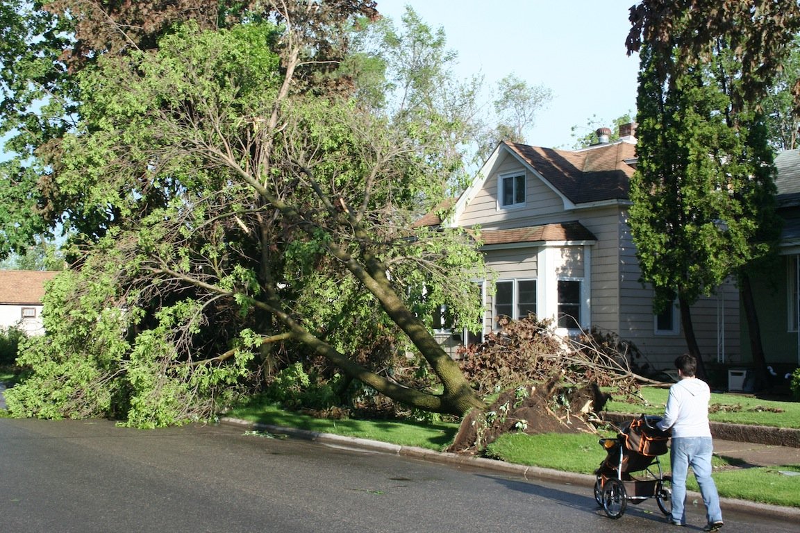 Uprooted Tree - 1200 block Redfield St.