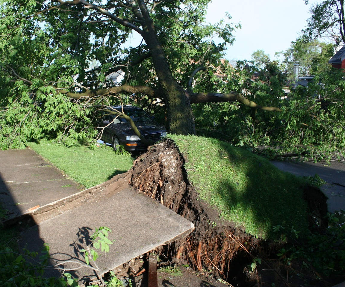 Uprooted Tree - 1300 block Redfield St.