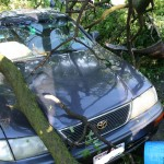 Tree on Car - 1300 block Redfield St.