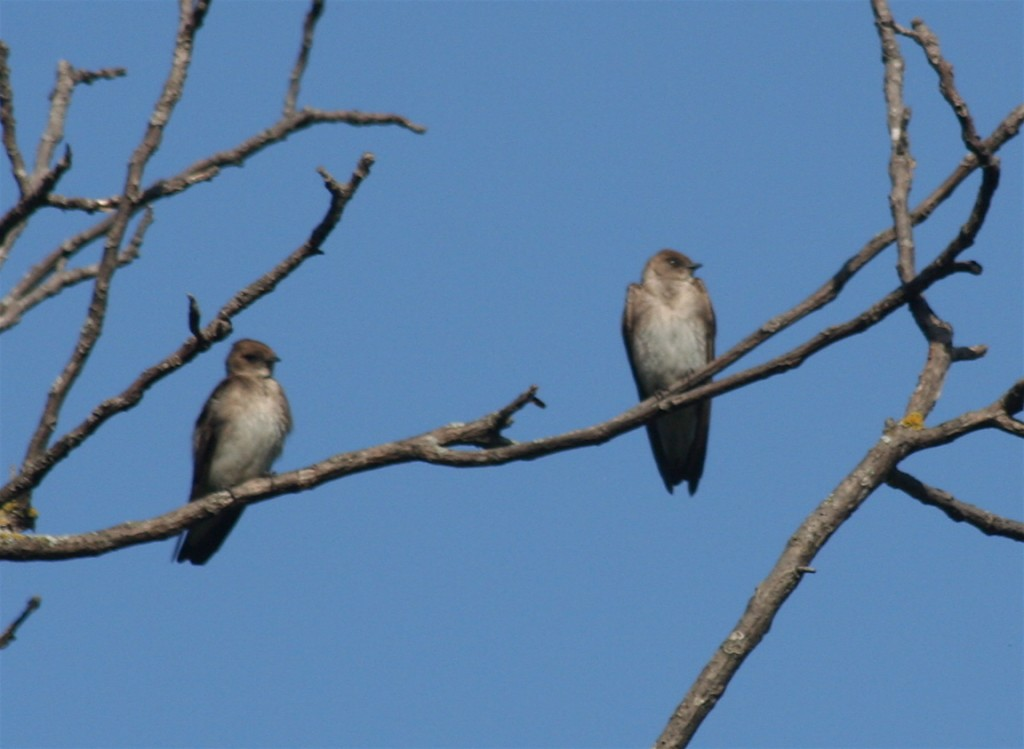 A pair of small birds pose for photographers along the La Crosse River Trail near West Salem.