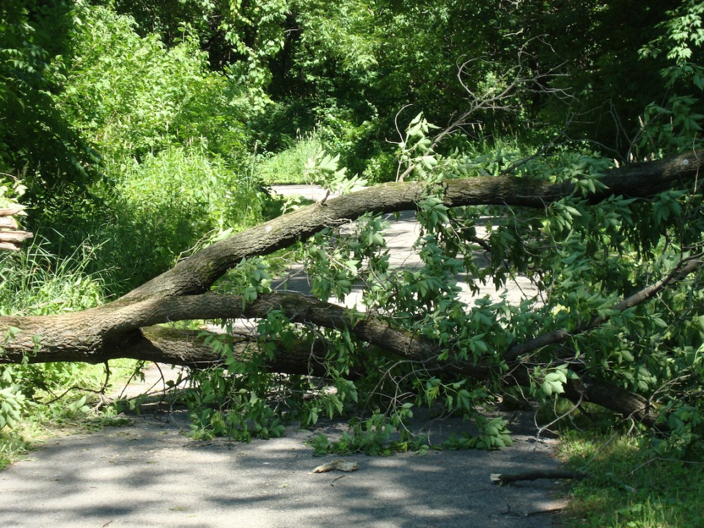A downed tree blocks the city bike trail on the north side of La Crosse.